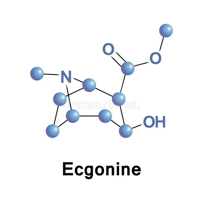 Ecgonine是托烷生物碱 库存例证