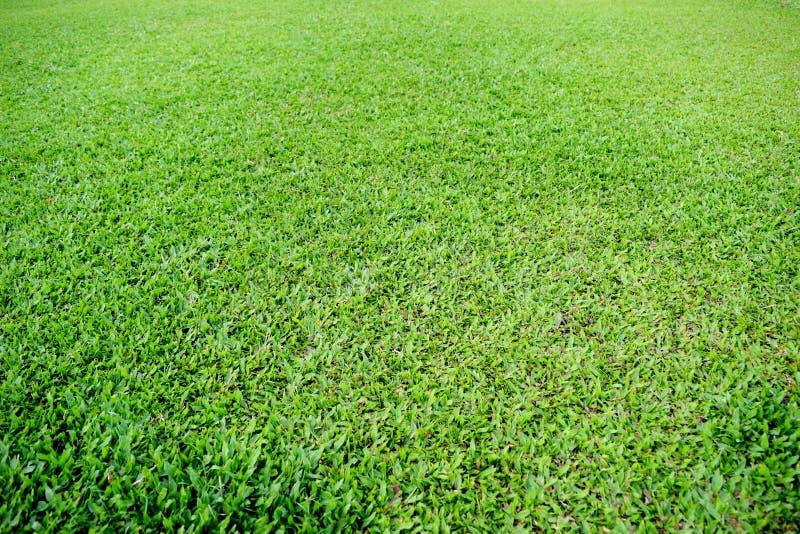 Echada del fútbol de la hierba verde fotografía de archivo