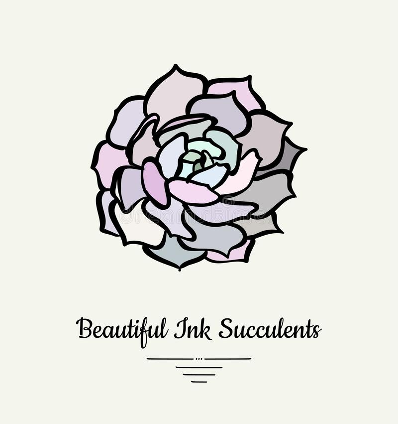 Echeveria hand drawn succulent vector isolated illustration. Modern ink succulent plant logo, icon, poster, banner, postcard. royalty free illustration