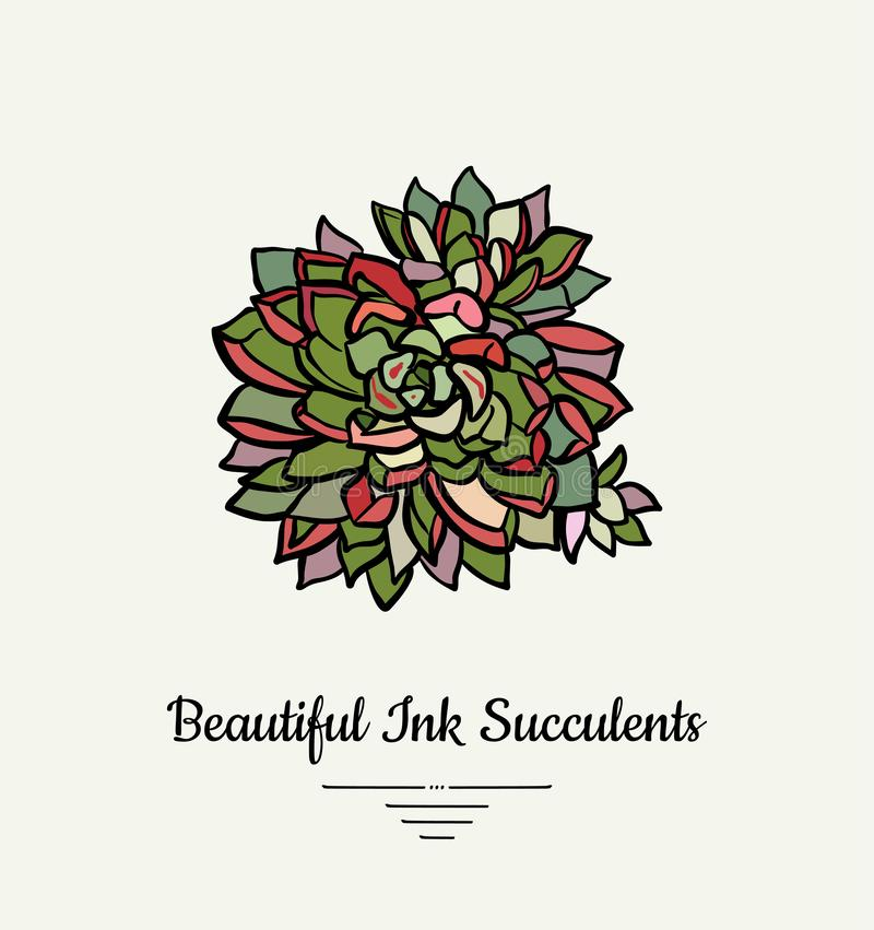 Echeveria hand drawn succulent vector isolated illustration. Modern ink succulent plant logo, icon, poster, banner, postcard. stock illustration