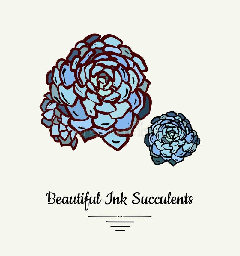 Echeveria tłustoszowatego wektoru ręka rysująca odosobniona ilustracja Nowożytnego atramentu rośliny tłustoszowaty logo, ikona, p ilustracja wektor