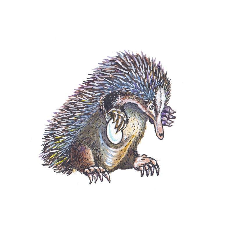Echidna (Anteater coperto di spine) illustrazione vettoriale