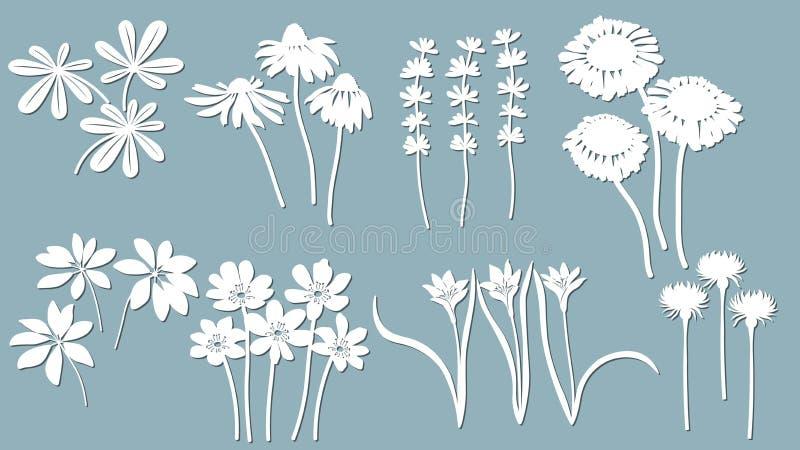 Echinacea, chamomile, schefler, noble hepatica, zephyrantes, stokesia. Vector illustration. Set of paper flower, stickers. Laser. Cut. Set template for laser stock illustration