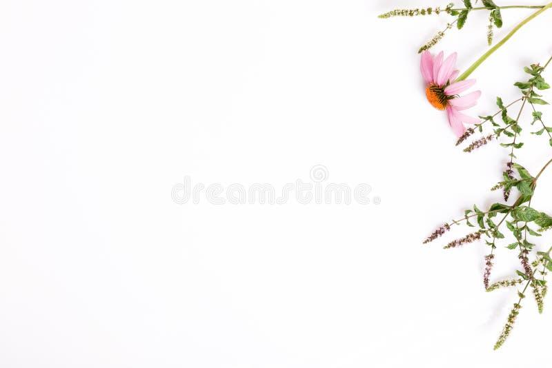 Echinacea, Duizendblad, geneeskrachtige vlakke kruidenachtergrond, legt, hoogste mening stock foto's