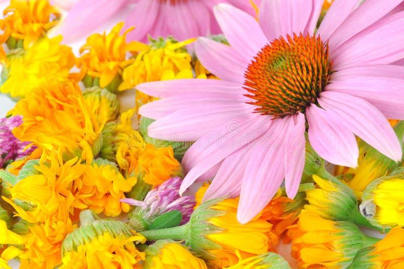 Echinacea en calendula stock foto's
