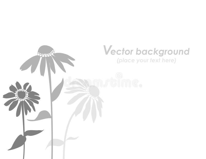 Echinacea flower background, stock illustration