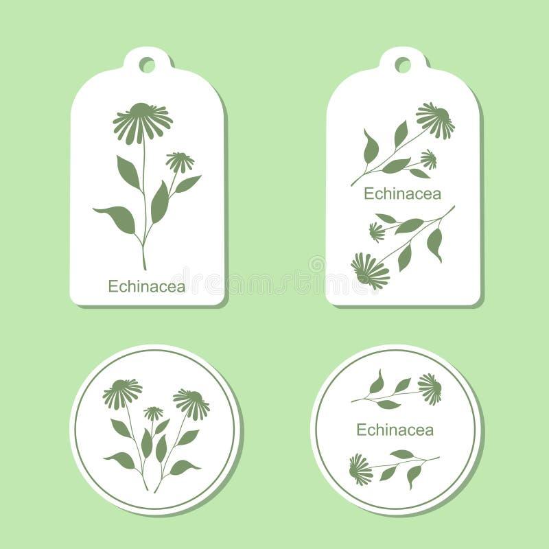 Echinacea gaat weg en bloeit royalty-vrije illustratie