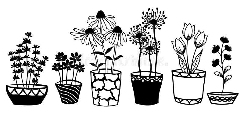 Echinacea, kamille, schefler, edele hepatica, zephyrantes, stokesia in potten Vector pictogram op witte achtergrond royalty-vrije illustratie