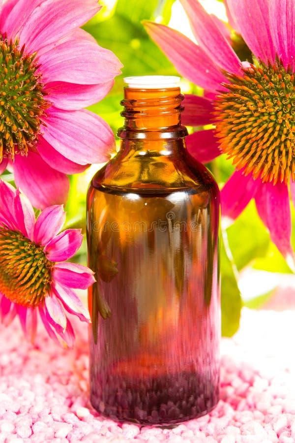 Echinacea plant extract stock image