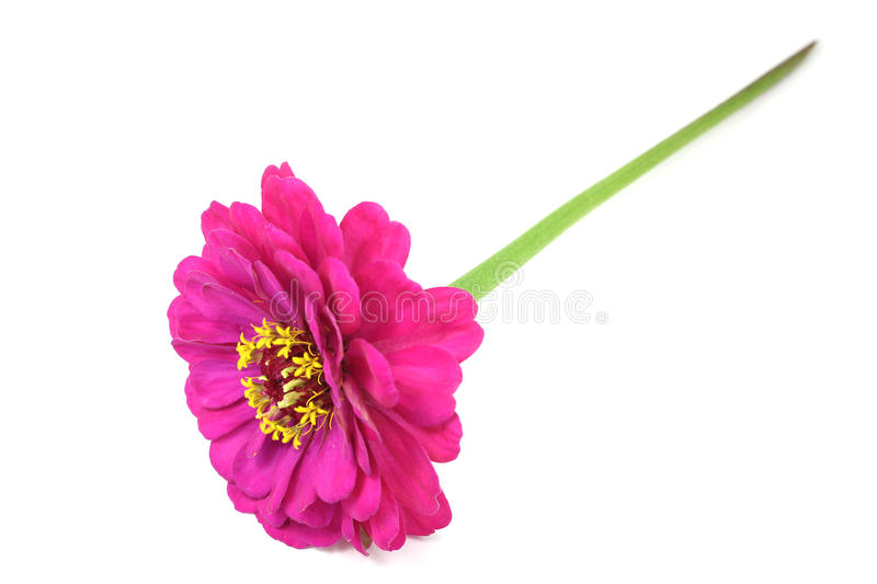 Download Echinacea rojo de la flor foto de archivo. Imagen de flor - 41906610