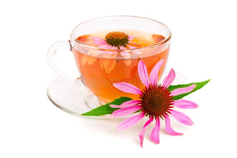 Echinacea tea isolated on white background. Medicinal tea.  royalty free stock photo