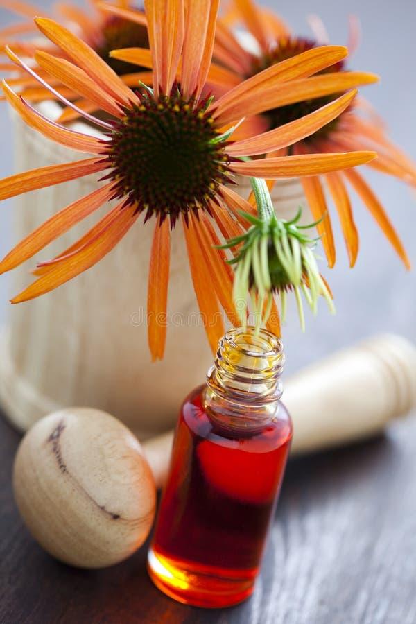 Echinaceaalternativmedicin fotografering för bildbyråer