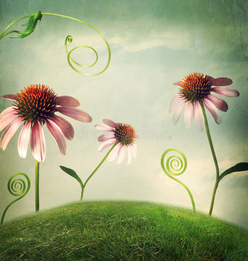 Echinaceaen blommar i fantasilandskap arkivfoto