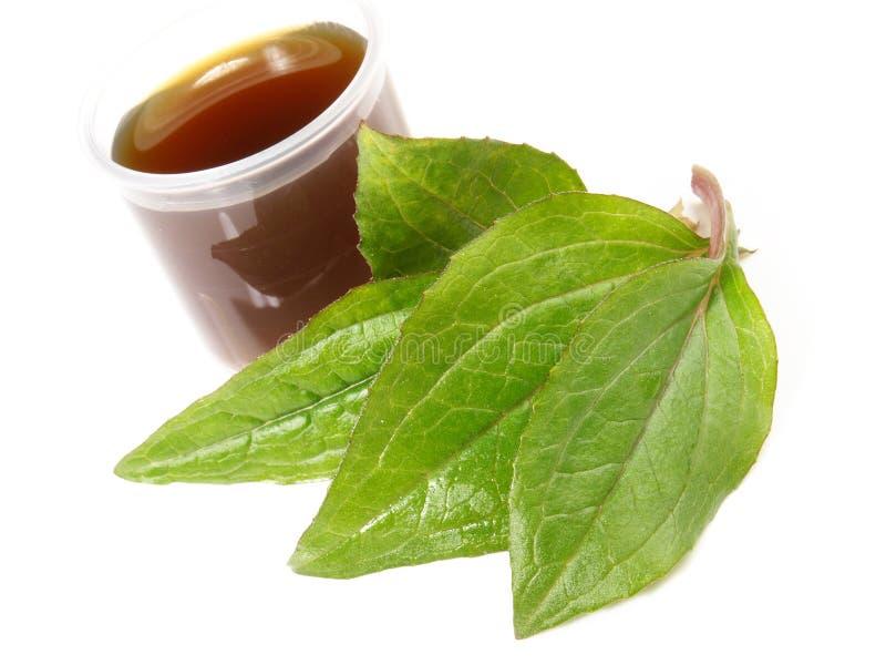 Echinachea ekstrakt - Zdrowy odżywianie zdjęcia stock