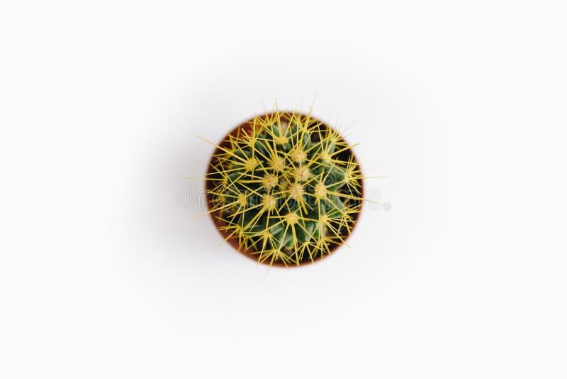 Echinocactus-grusonii lokalisiert auf Draufsicht des weißen Hintergrundes lizenzfreie stockfotografie