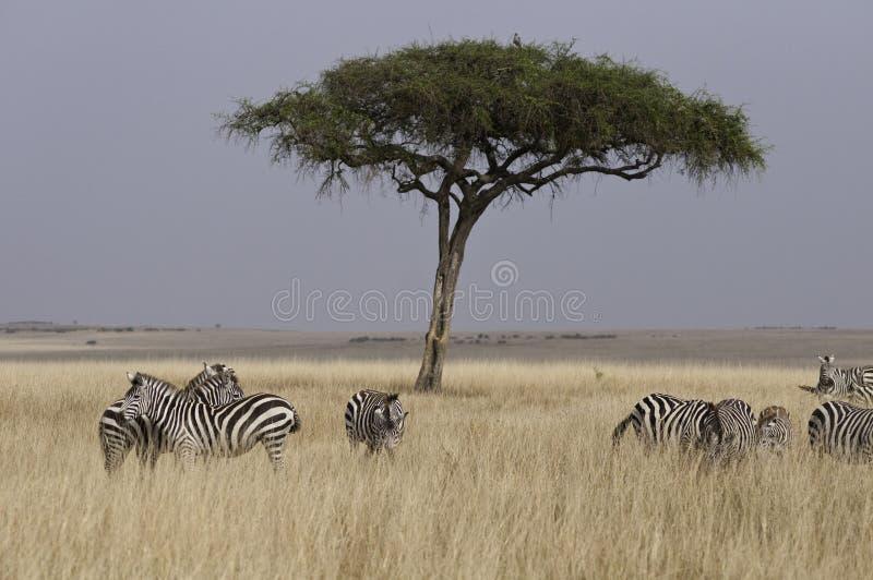 Echt Afrika royalty-vrije stock afbeelding