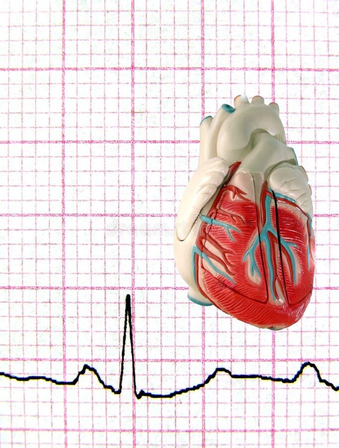 Echt electrocardiogram met ModelHart royalty-vrije stock afbeeldingen