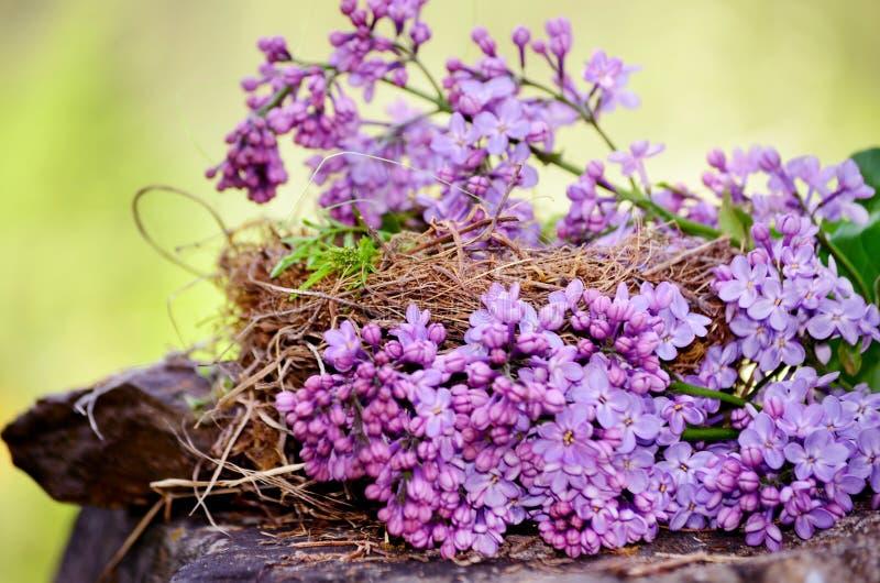 Echt nest met lilac bloem royalty-vrije stock afbeeldingen