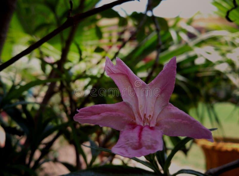 Echt roze royalty-vrije stock foto