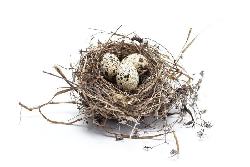 Echt vogelnest met eieren royalty-vrije stock afbeelding