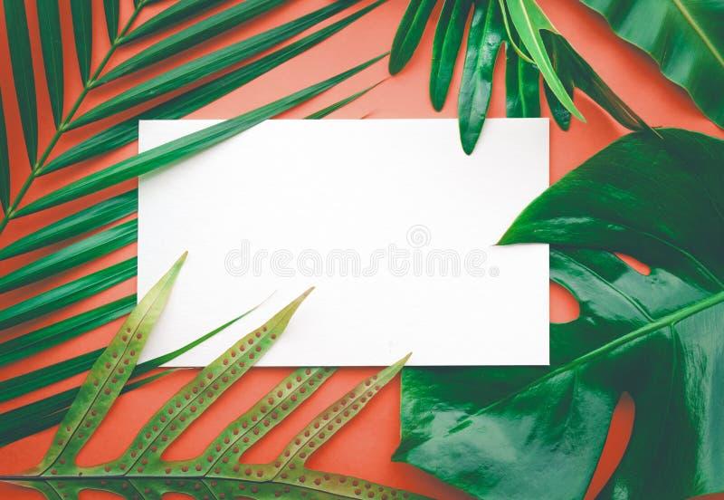 Echte bladeren met witte exemplaar ruimteachtergrond Tropische Botanisch royalty-vrije stock afbeelding
