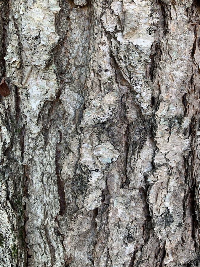 Echte boom stock afbeeldingen
