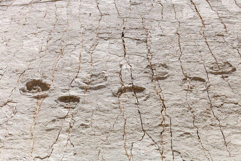 Echte die dinosaurusvoetafdruk in de rots wordt gestempeld Nacionalpark in Sucre, Bolivië stock afbeeldingen