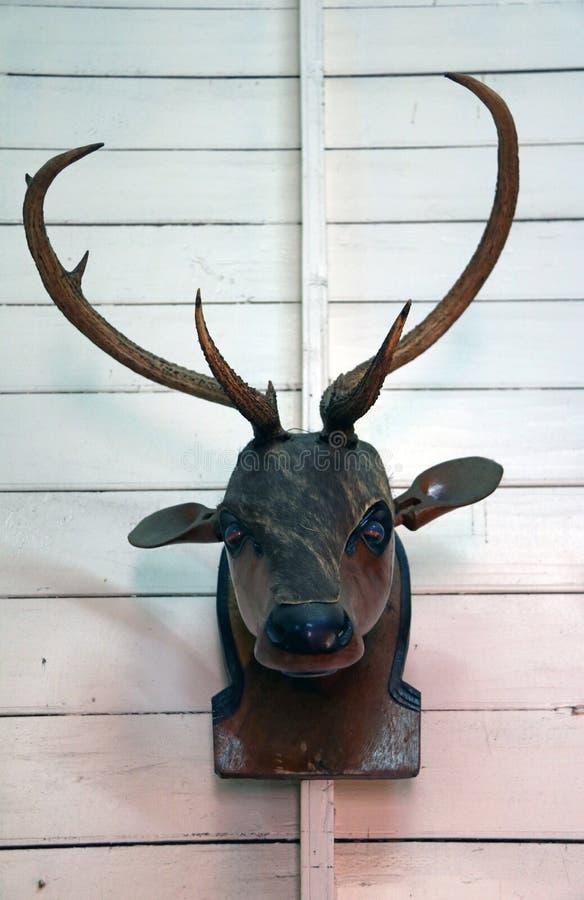 Echte geweitak en houten hoofd van herten royalty-vrije stock foto