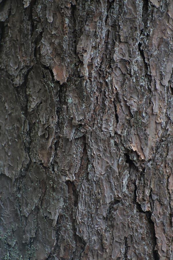 Echte houten textuur royalty-vrije stock foto