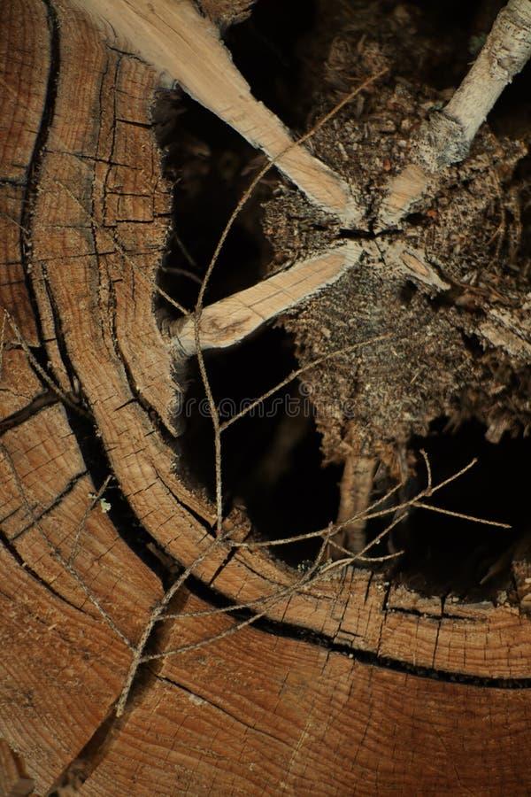 Echte houten textuur royalty-vrije stock afbeeldingen