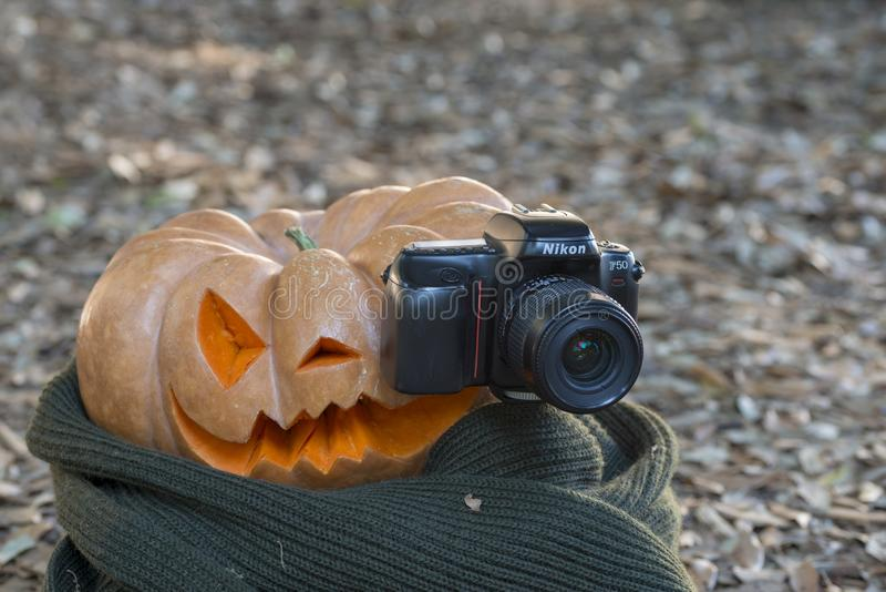 Echte oranje Halloween-pompoen met het snijden stock foto