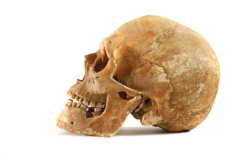 Echte oude menselijke schedel stock afbeeldingen