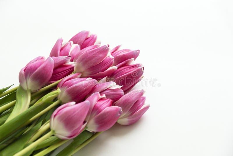 Eckblumenstrauß von Tulpenblumen auf Weiß lizenzfreie stockfotos