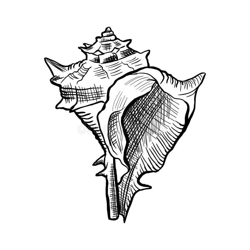 Eckige Murextritonshornhandgezogene Tinten-Stiftskizze lizenzfreie abbildung