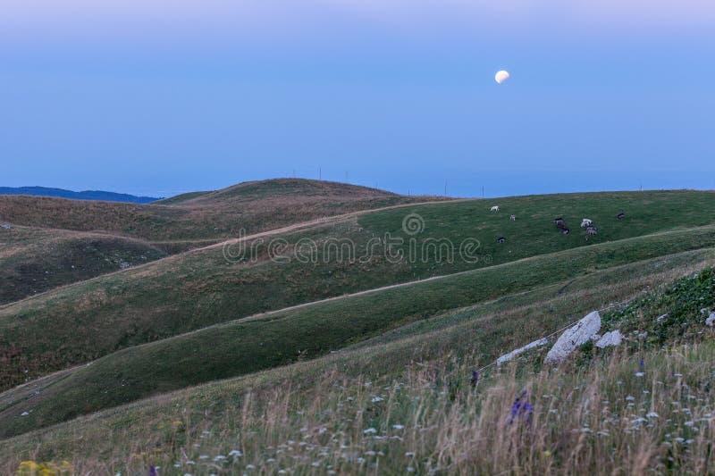 Eclissi della luna con erba e gli asini di pascolo immagini stock libere da diritti