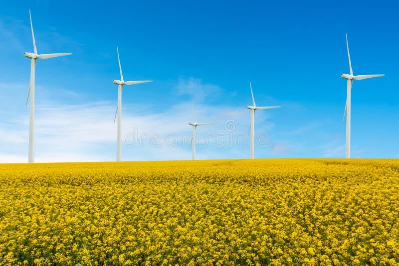 Eco力量、风轮机和油菜籽领域 库存照片
