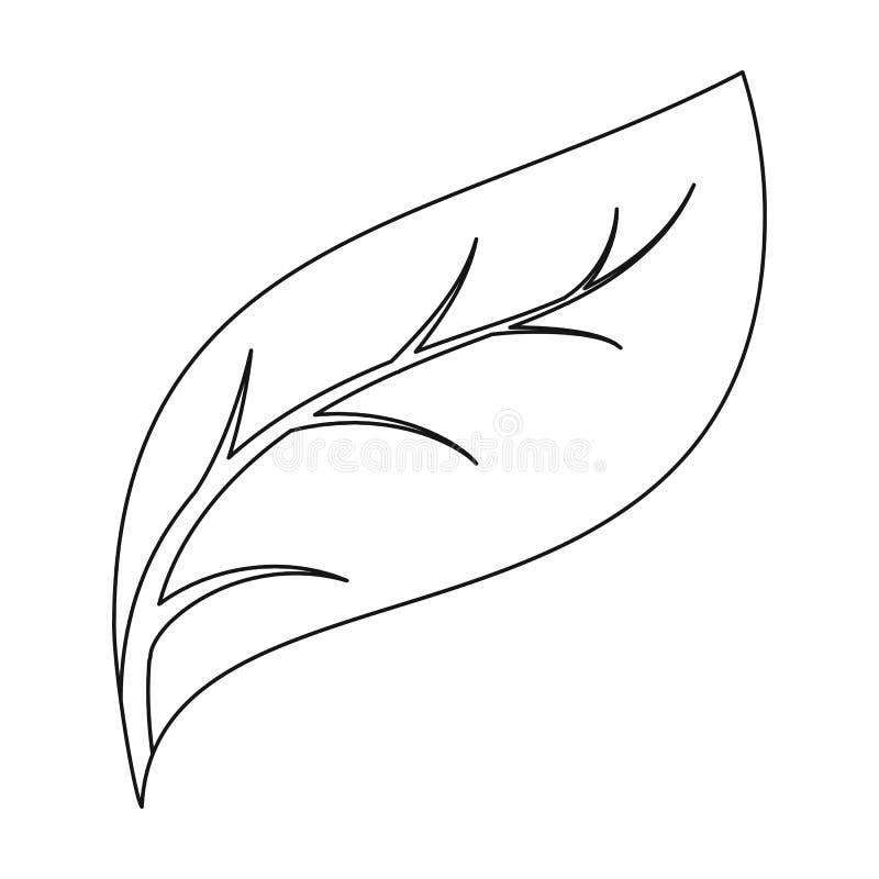 eco在白色背景在概述样式的叶子象隔绝的 生物和生态标志股票传染媒介图片