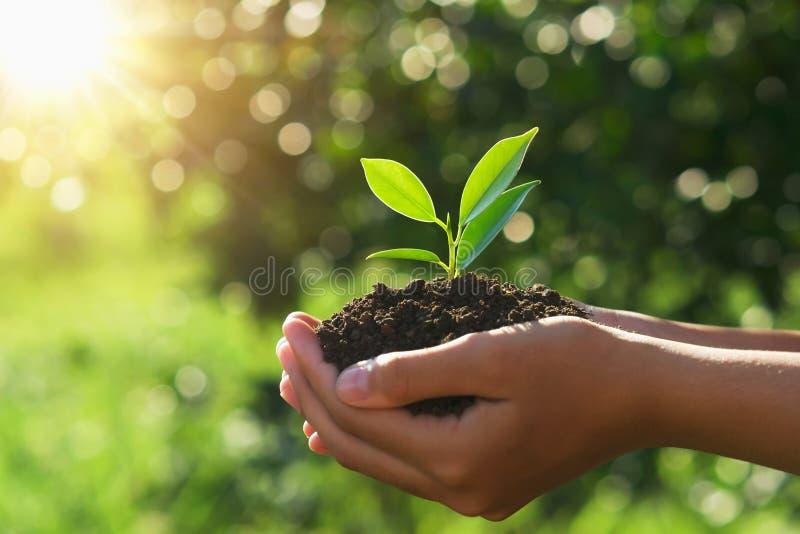 eco地球日概念 手在阳光和绿色自然背景下的拿着年幼植物 免版税库存照片