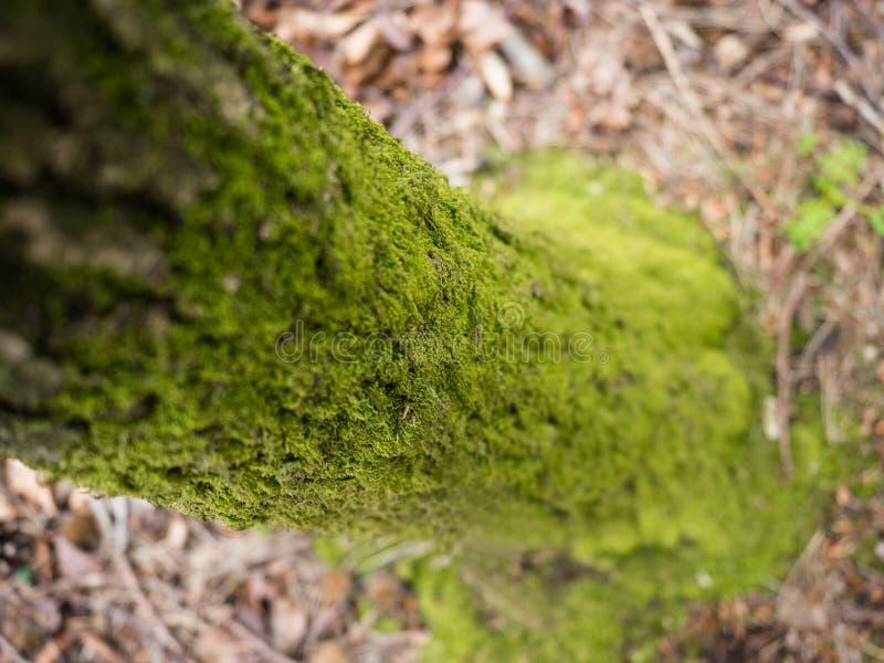 Eco绿色树干 图库摄影