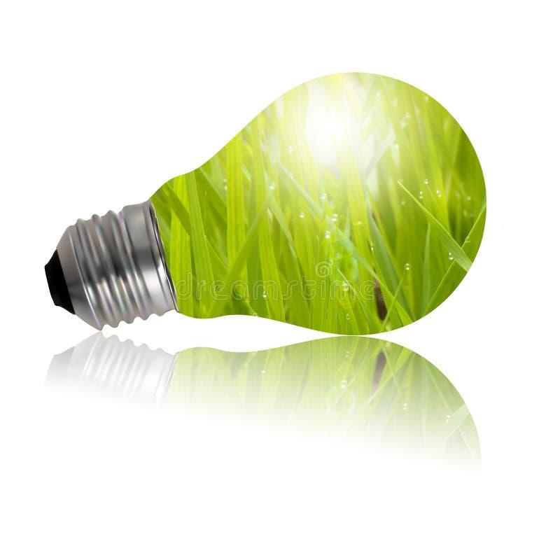 eco闪亮指示 向量例证