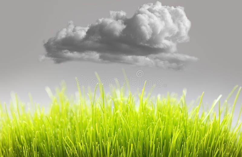 Eco życzliwa świeża trawa fotografia stock