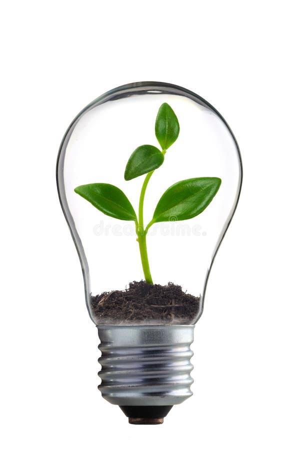 Download Eco obraz stock. Obraz złożonej z ekologia, przyrost - 13332451