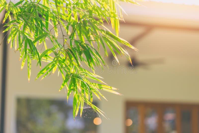 Eco autoguident le jardin vert d'usine de feuille d'arbre de concept photographie stock libre de droits