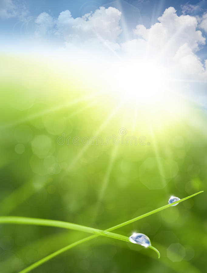 Eco background with Sky, Grass, Water Drops royalty free stock image