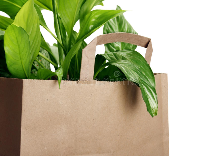 Download Eco bag stock photo. Image of commerce, ecology, healthy - 18807684