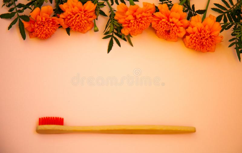 Eco bamboo toothbrushes, ecological lifestyle concept, place for text, wood brush, zero stock photos