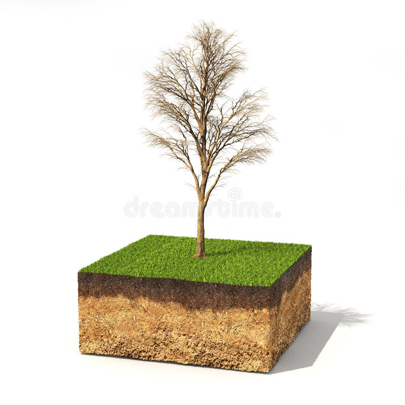Eco concept. Cross section of ground with tree without leaves on a white. 3d illustration stock illustration