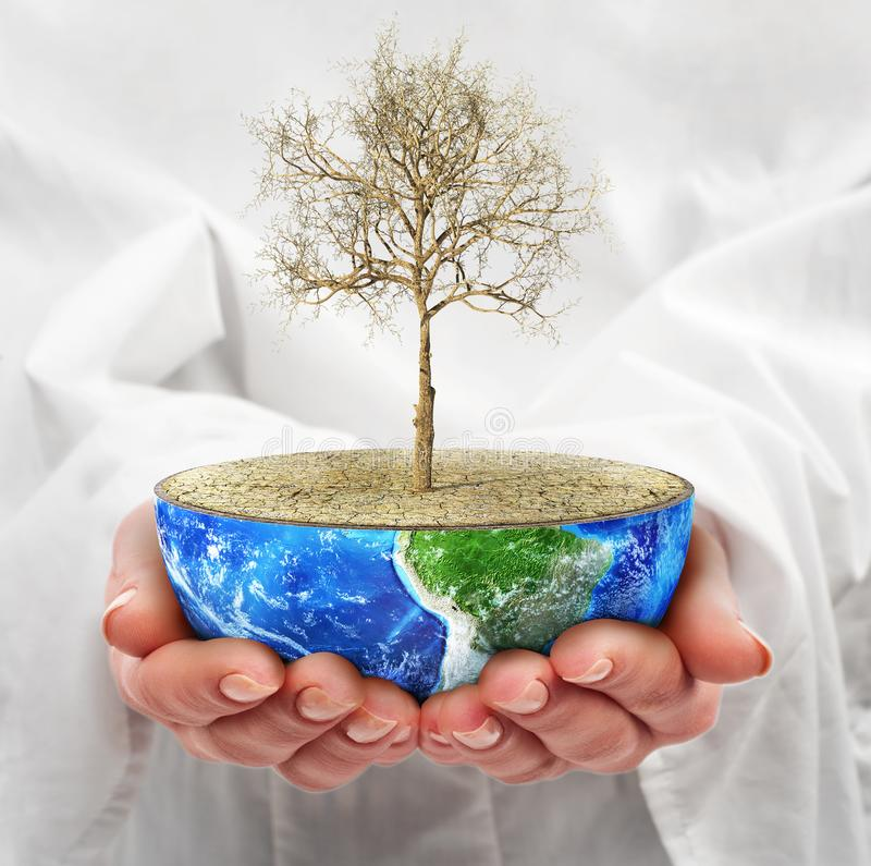 Eco concept. Hands hold a half planet with dead tree. Save the planet stock photography