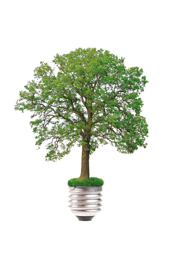 Eco concept: tree grows out of the light bulb. Isolated on white background stock photos