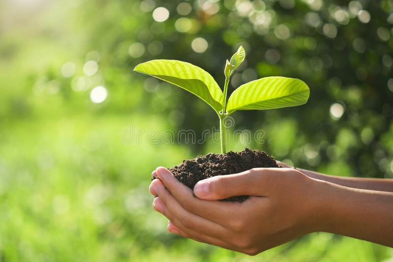 Eco earth day concept. hand holding young plant in sunshine and green nature background. Agriculture, bio, care, child, clean, conservation, development royalty free stock image